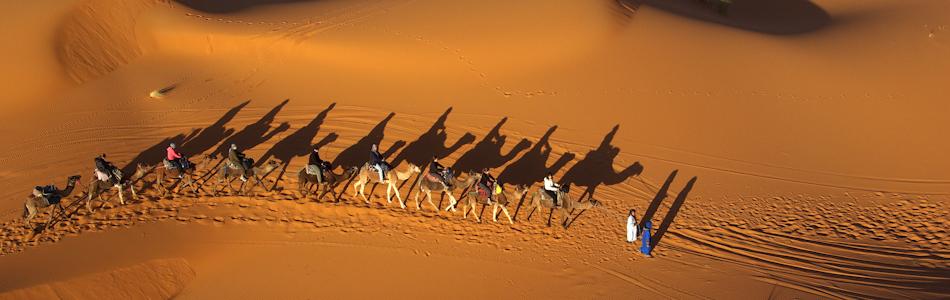 SB-Camels-comp.jpg