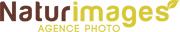 NI-Logo-web.jpg
