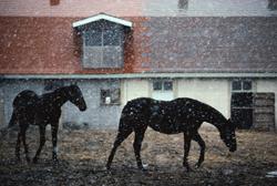Horses_Asia.jpg